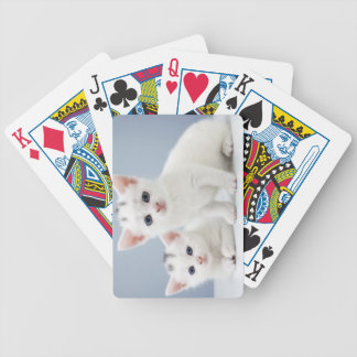 Two very young white kittens stare inquisitively bicycle playing cards