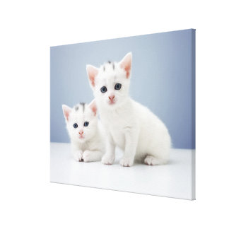Two very young white kittens stare inquisitively canvas print