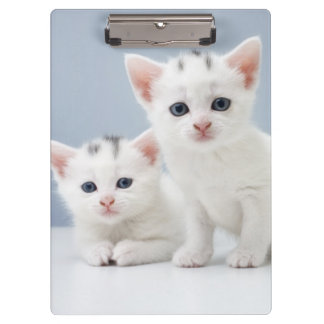 Two very young white kittens stare inquisitively clipboard