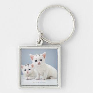 Two very young white kittens stare inquisitively key ring