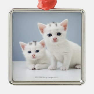 Two very young white kittens stare inquisitively Silver-Colored square decoration