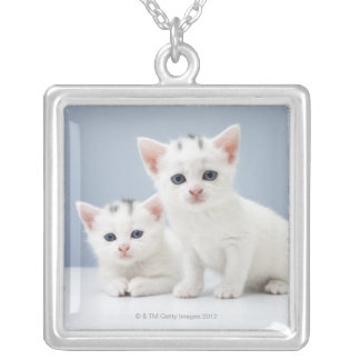 Two very young white kittens stare inquisitively silver plated necklace