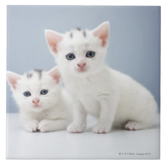 Two very young white kittens stare inquisitively tile