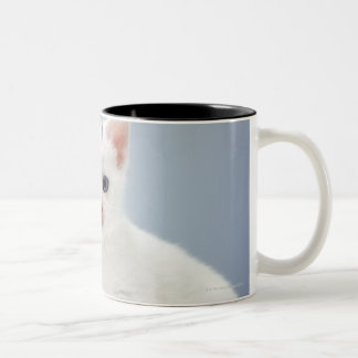 Two very young white kittens stare inquisitively Two-Tone coffee mug