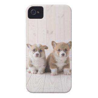 Two Welsh Corgi Sitting iPhone 4 Case