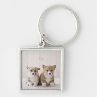 Two Welsh Corgi Sitting Key Ring