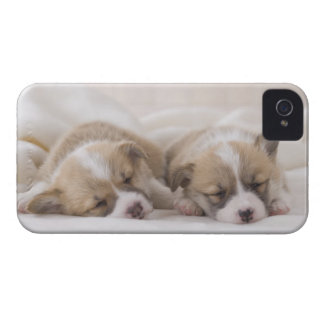 Two Welsh Corgi Sleeping Case-Mate iPhone 4 Case
