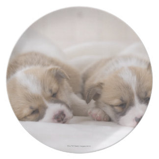 Two Welsh Corgi Sleeping Dinner Plate