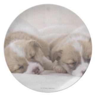 Two Welsh Corgi Sleeping Plate