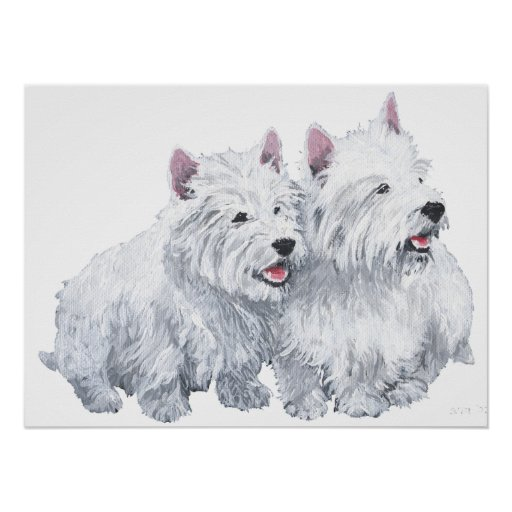 Two West Highland White Terriers Posters