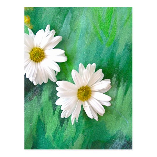 Two White Daisies Postcard