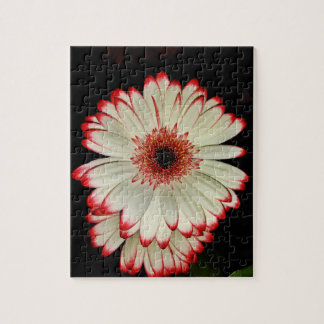 Two White Gerbera Daisies Jigsaw Puzzle