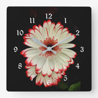 Two White Gerbera Daisy Flowers Square Wall Clock