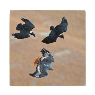 Two White-Necked Ravens Chase Jackal Buzzard Maple Wood Coaster