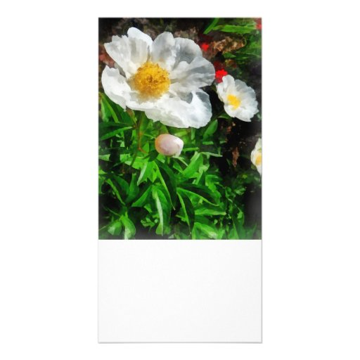 Two White Poppies Photo Greeting Card