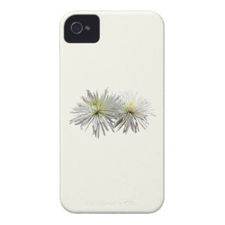 Two White Spider Mums iPhone 4 Cover