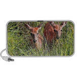 Two White Tail Deer Travelling Speakers