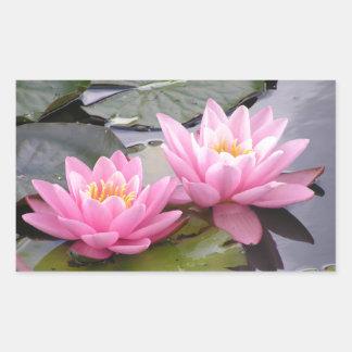 Two wild pink waterlilies in a pond rectangular sticker