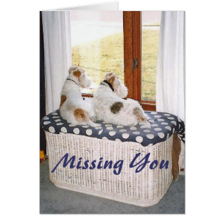 Two Wire Fox Terriers In The Window Greeting Card