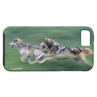 Two wolves in mountain meadow case for the iPhone 5