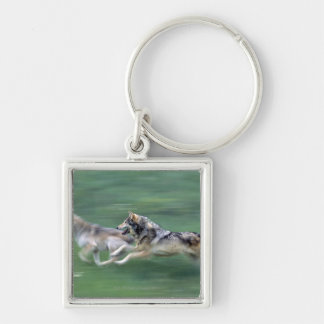 Two wolves in mountain meadow key ring