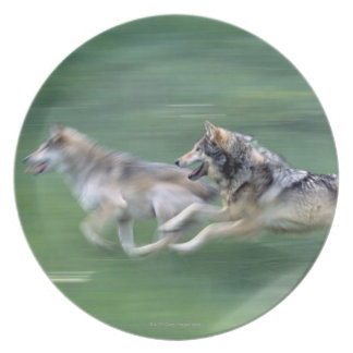 Two wolves in mountain meadow plate