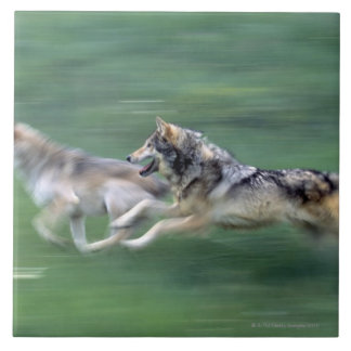 Two wolves in mountain meadow tile