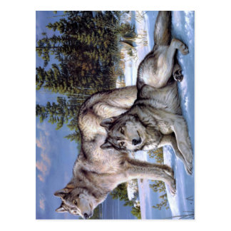 Two wolves in winter Siberian Postcard