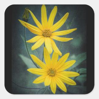 Two yellow flowers of Jerusalem artichoke. Square Sticker