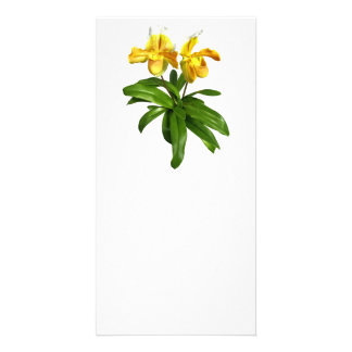 Two Yellow Lady Slipper Orchids Photo Greeting Card