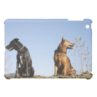 Two young dogs looking in opposite directions. cover for the iPad mini