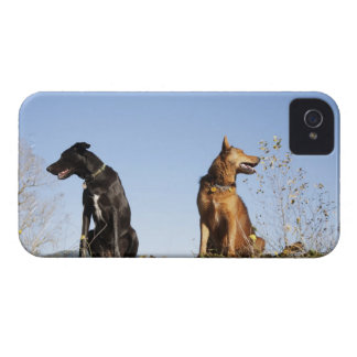 Two young dogs looking in opposite directions. iPhone 4 Case-Mate cases