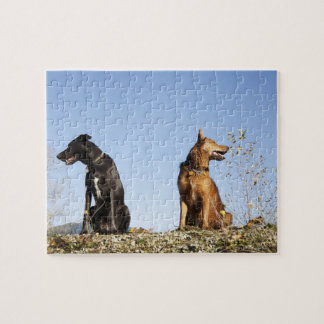 Two young dogs looking in opposite directions. jigsaw puzzle