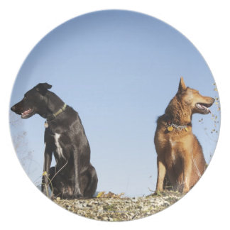 Two young dogs looking in opposite directions. plate