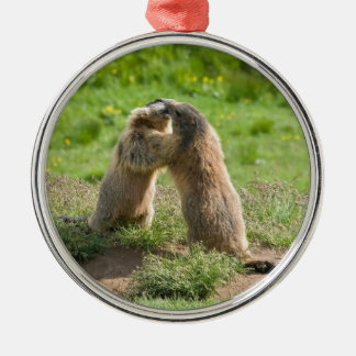 two young marmots Silver-Colored round decoration