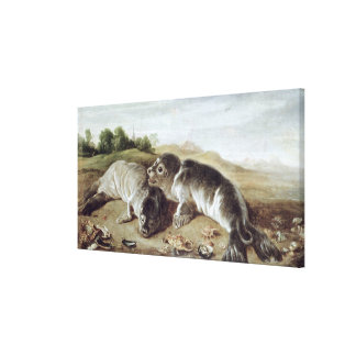 Two Young Seals on the Shore, c.1650 Canvas Print