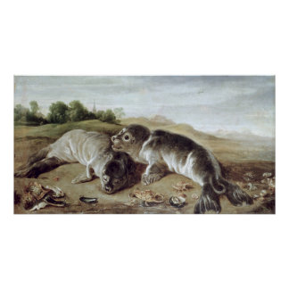 Two Young Seals on the Shore, c.1650 Poster
