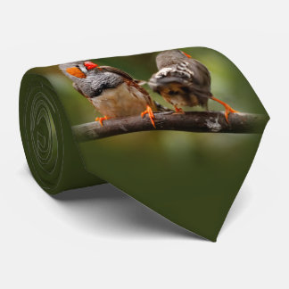 Two Zebra Finches Posing for the Camera Tie