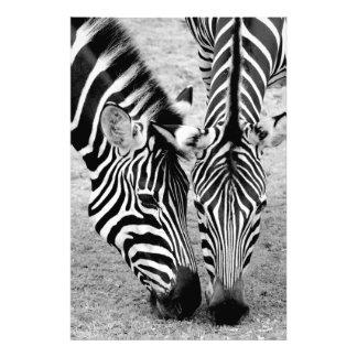 Two zebras - black and white photo print
