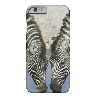 Two Zebras (Equus quagga) drinking water, Barely There iPhone 6 Case