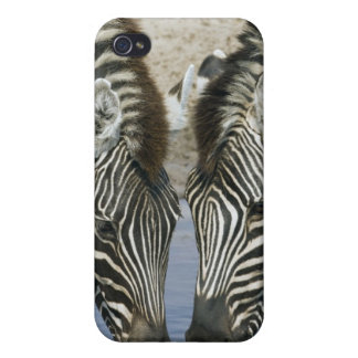 Two Zebras (Equus quagga) drinking water, iPhone 4/4S Cases