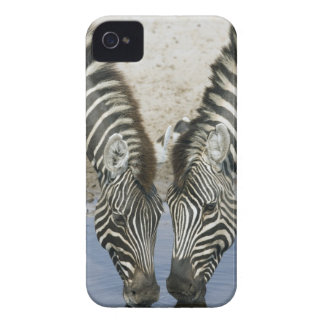 Two Zebras (Equus quagga) drinking water, iPhone 4 Cover