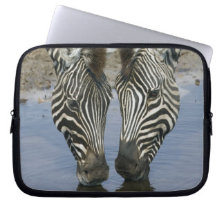 Two Zebras (Equus quagga) drinking water, Laptop Sleeve
