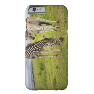 Two zebras, South Africa Barely There iPhone 6 Case
