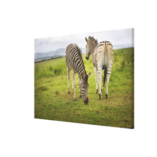 Two zebras, South Africa Canvas Print