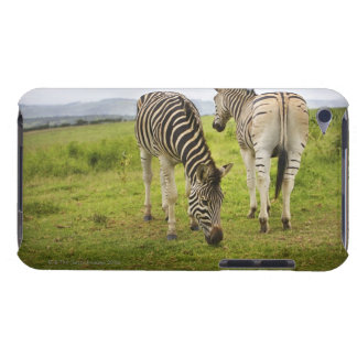 Two zebras, South Africa iPod Touch Case
