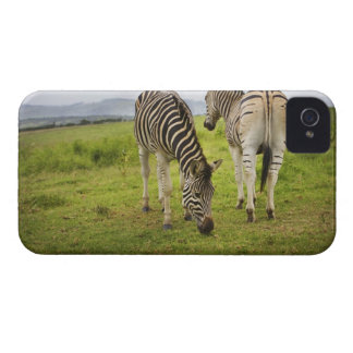 Two zebras, South Africa iPhone 4 Cover