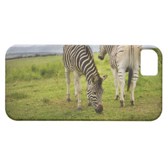 Two zebras, South Africa iPhone 5 Case