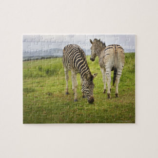Two zebras, South Africa Jigsaw Puzzle