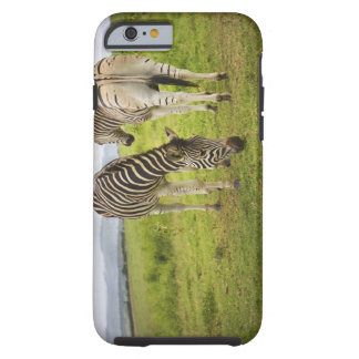 Two zebras, South Africa Tough iPhone 6 Case